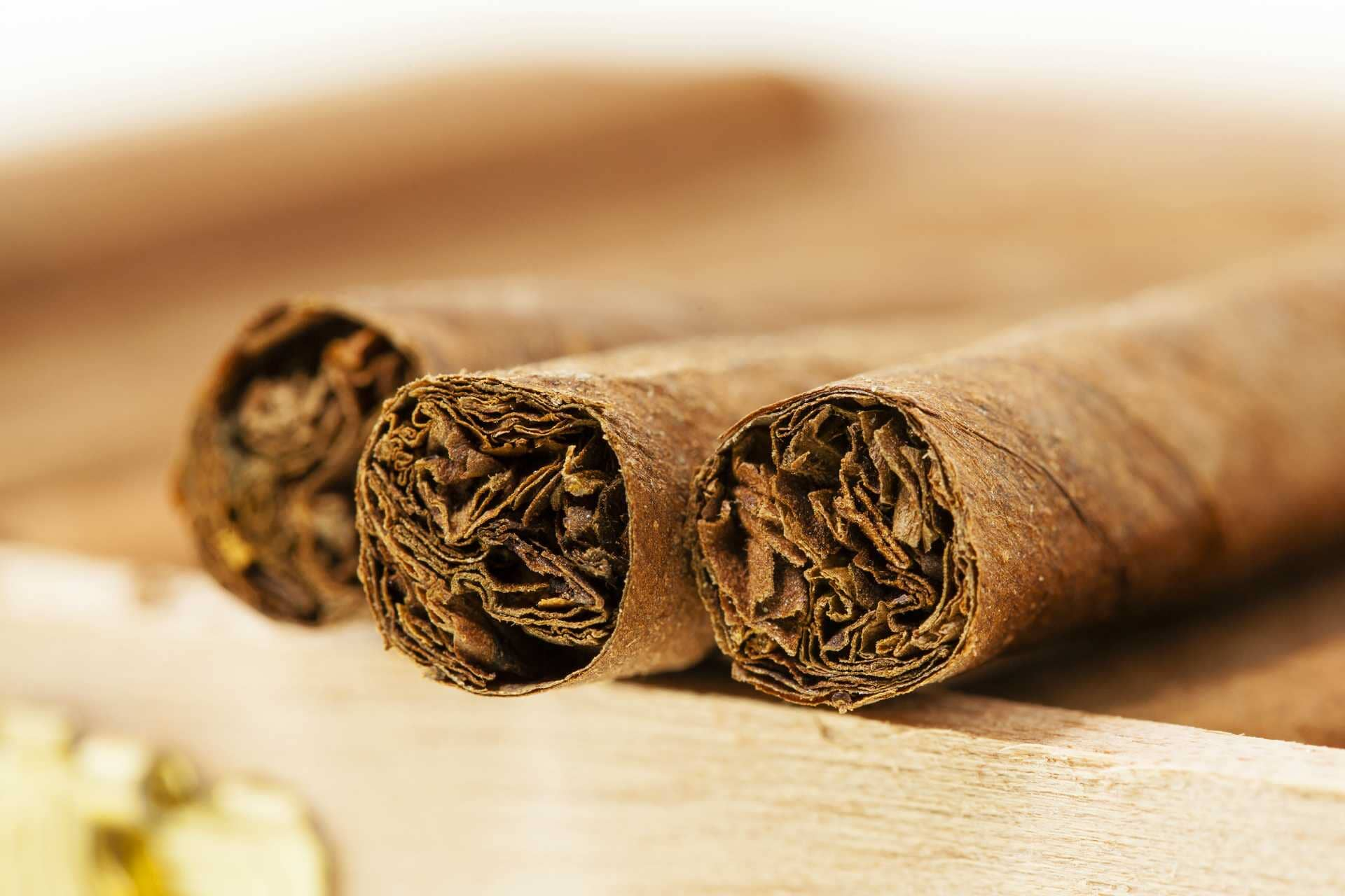Cigarrilhas sem nexo
